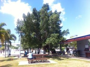 Einer der BBQ-Stellen in Cairns